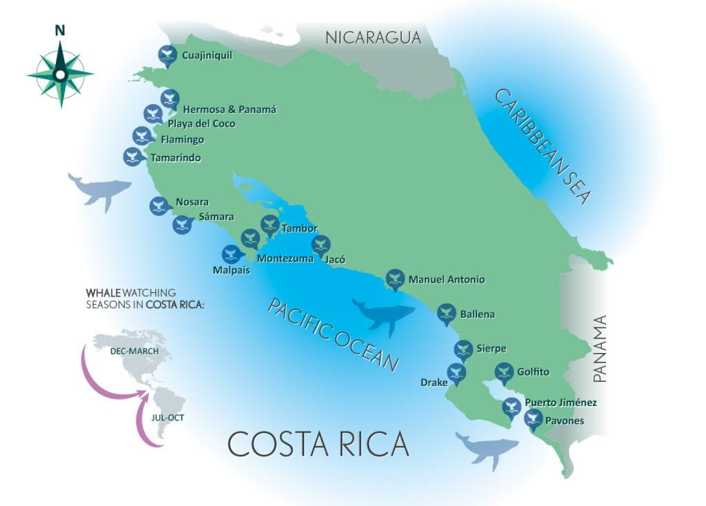 Migration Maps – Whales | Travel Costa Rica on