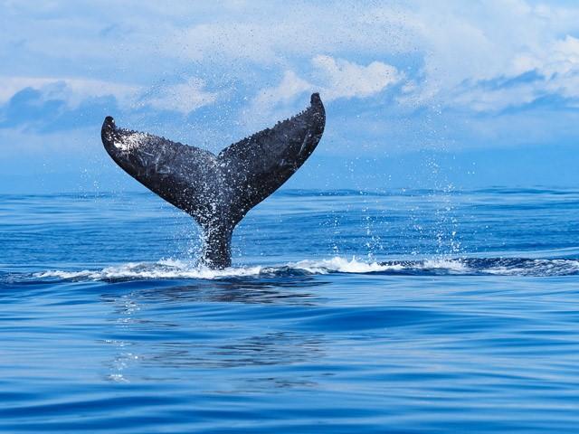 Wannes Kern und Tatiana Fass whale1