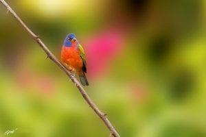Observation des oiseaux au Costa Rica