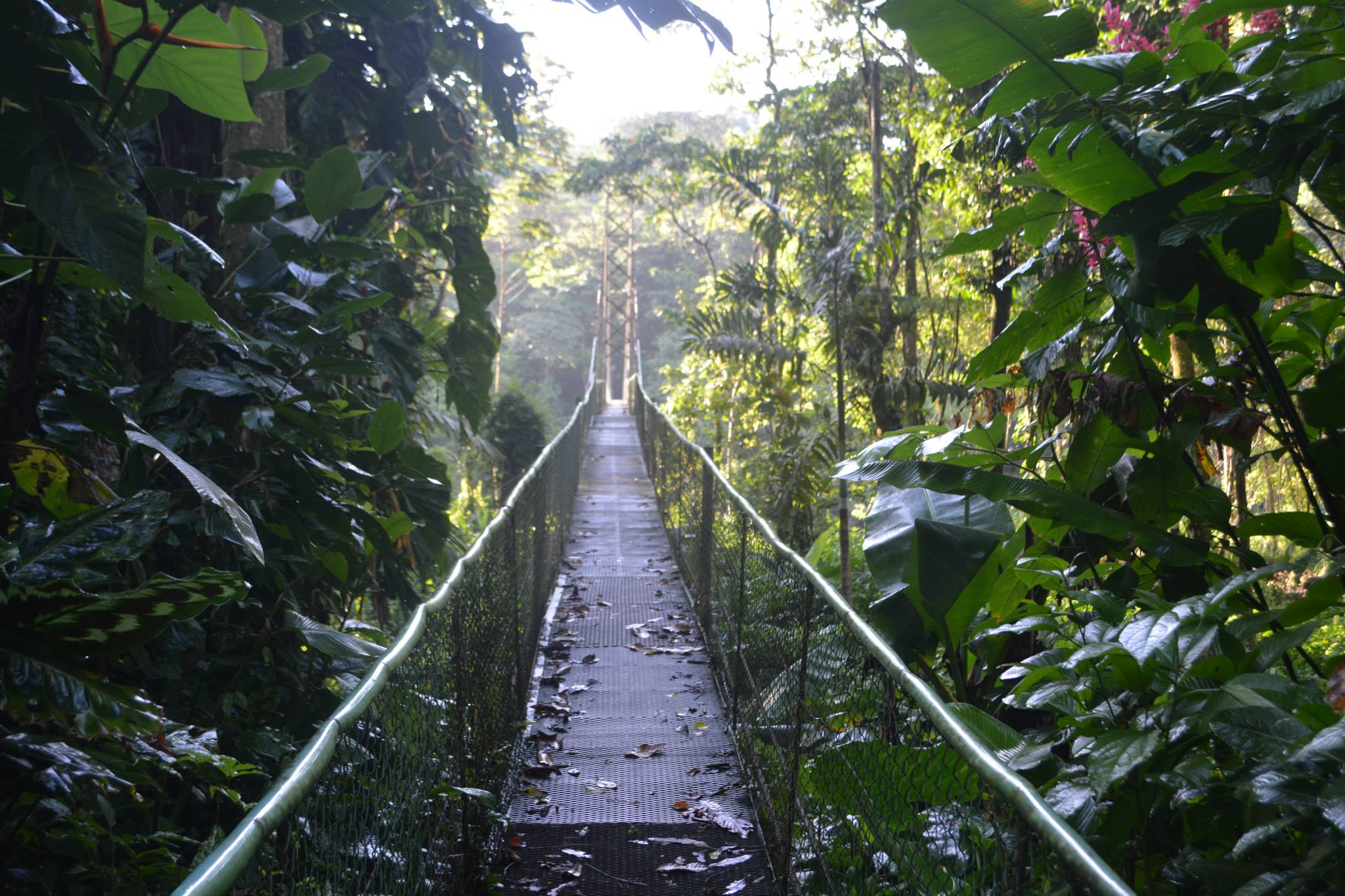 Rainmaker Reserve Suspension Bridges